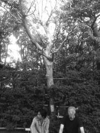 太宰が植えたさるすべりの木にて。ほろほろ先生がかぶっているのはストッキング。プライバシーが気になるそうです。